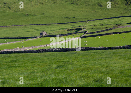 Drystone wall patterns in the lush pastures of Hope Valley - Stock Photo