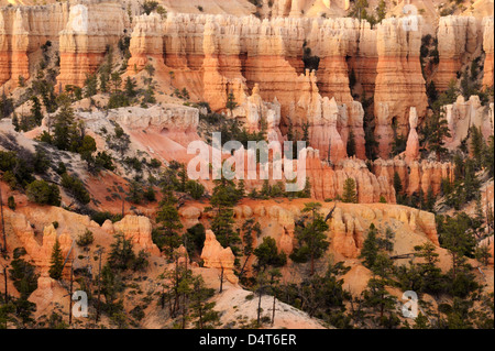 salmon colored cliffs after sunset in Bryce Canyon - Stock Photo