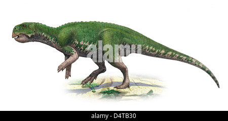Psittacosaurus mongoliensis, a prehistoric era dinosaur from the Early Cretaceous period. - Stock Photo