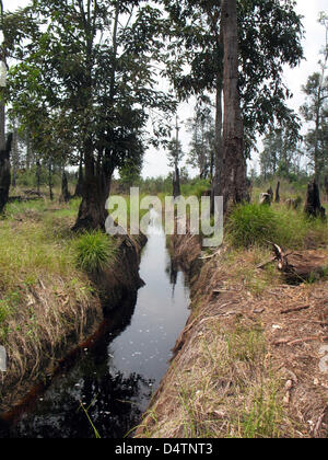 One of the channels to transport deforested trees running through Kalimantan region on Borneo island, Indonesia, - Stock Photo