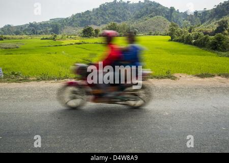 March 12, 2013 - Ban Thabou, Luang Prabang, Laos - A motorcyclist on Highway 13 passes green rice fields. The paving - Stock Photo