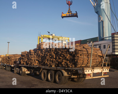 Timber loaded for export at the harbour in Montevideo, Uruguay - Stock Photo