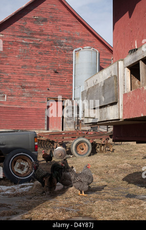 Vermont CSA farm yard with chickens in the early spring with corner of moving chicken house on right. - Stock Photo