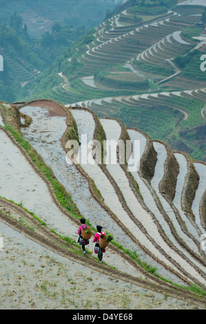 Red Yao Woman working in Rice Terraces, Dazhai Village - Stock Photo