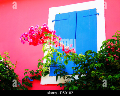 Bougainvillea with blue shutter Greece - Stock Photo