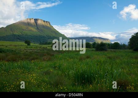 Wildflower meadow beneath Benwiskin mountain, County Sligo, Ireland. - Stock Photo