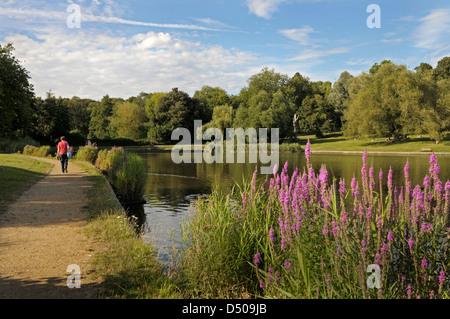 London, Hampstead Heath, Highgate ponds, the 'model boating pond'. - Stock Photo