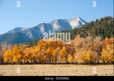 A mountainside full of evergreens with a dusting of snow on Mount Princeton in the background complete this autumn - Stock Photo