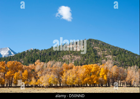 A mountainside full of evergreens with a dusting of snow on the mountain in the background complete this autumn - Stock Photo