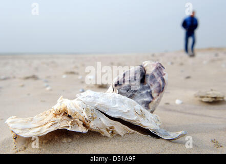 An employee of the Lower Saxony Water Management, Coastal Defence and Nature Conservation Agency (NLWK), walks along - Stock Photo