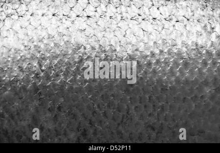 Salmon fish scales grunge texture back ground - Stock Photo