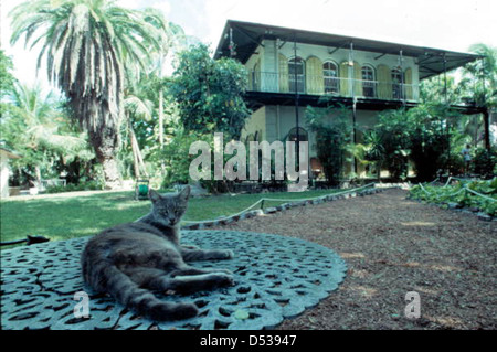Cat relaxing in front of the Hemingway House: Key West, Florida - Stock Photo