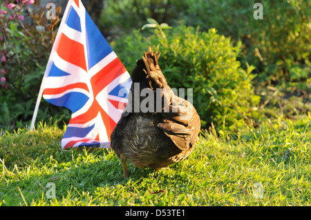 The bottom of a Welsummer hen in english country garden - Stock Photo