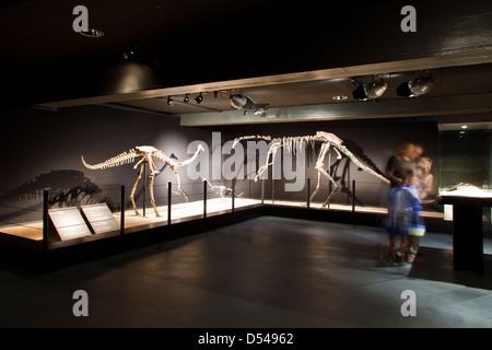 Exposition of Dinosaurs from Gobi desert in Mongolia. Cosmocaixa museum, Barcelona, Spain - Stock Photo