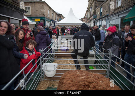 Ramsbottom, Lancashire, UK Sunday 24th March, 2013. Crowds at the mini-farm at the 5th Annual Chocolate Festival, - Stock Photo