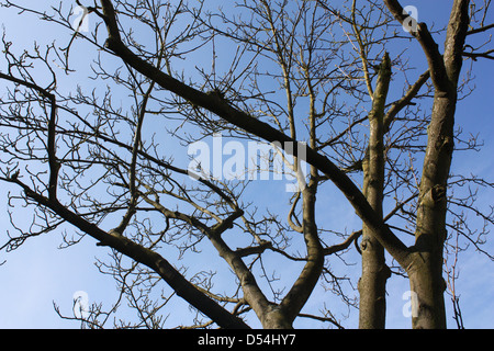 Bare tree branches without leaves in winter season - Stock Photo