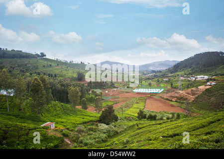 Tea cultivation in the valley, Ooty, Tamil Nadu, India - Stock Photo