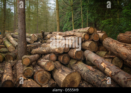 Pile of cut logs in forest - Stock Photo