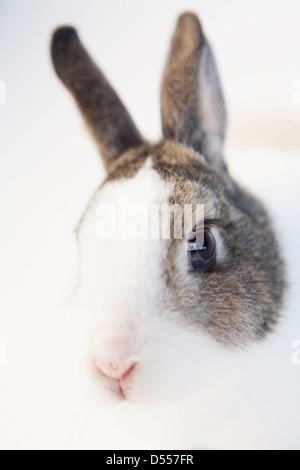 Close up of rabbits face