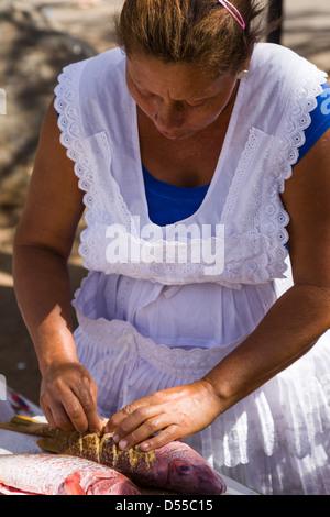 Red snapper (Lutjanus campechanus) being prepared at Ocotal beach, Guanacaste Province, Costa Rica. - Stock Photo