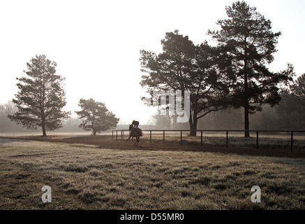 Neuenhagen, Germany, silhouette, horse and rider during the morning training on the Boll Ensdorfer Trainierbahn - Stock Photo