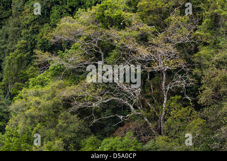 Premontane forest, The Children's Eternal Rain Forest, Bosque Eterno de los Niños, Monteverde, Costa Rica. - Stock Photo