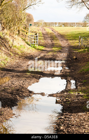 Waterlogged Public Footpath and Right of Way in Countryside near Hassall Green Cheshire England United Kingdom UK - Stock Photo