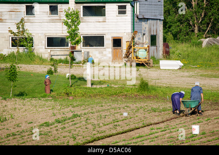 Women working in a field as a young girl watches on a Amish farm near Lucknow, Ontario. - Stock Photo