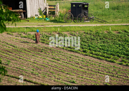Child in a field on a Amish farm near Lucknow, Ontario. - Stock Photo