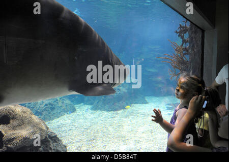 A little girl with tiger make-up in her face stands amazed at the aquarium of the Berlin Zoo and observes a giant - Stock Photo