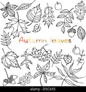 Autumn leaves doodles set - Stock Photo