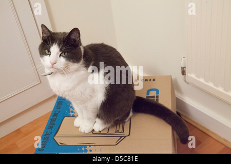 Cat sitting on computer packaging box. - Stock Photo