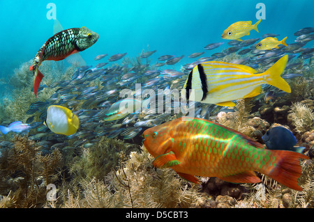 Scuba diving in a coral reef with shoal of colorful fish - Stock Photo
