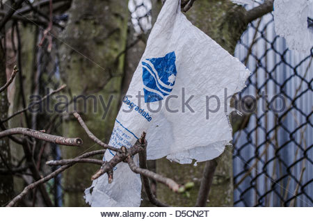 Degradable plastic bag caught on tree branch, West Midlands, UK - Stock Photo