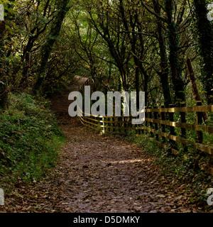 South-west coast path near Swanpool, Falmouth, Cornwall - Stock Photo