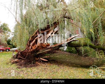 Wind damaged tree and house. - Stock Photo