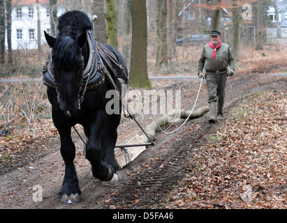 Hans Wilhelm Meier and his French Percheron stallion Medoc pull logs from the municipal forest Eilenriede in Hanover, - Stock Photo