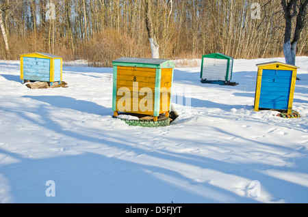 Colorful yellow and blue beehives on winter snow in farm garden - Stock Photo