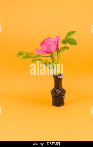 brier wild rose flower in small vase on yellow background - Stock Photo