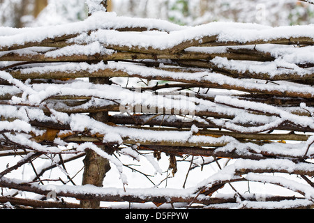 Snow pattern on a laid hedge in winter. - Stock Photo