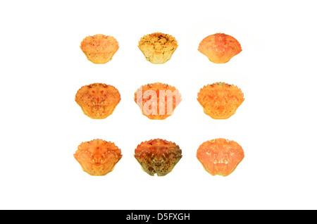 Nine crab shells on a white background. - Stock Photo