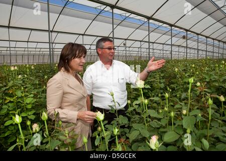 Dutch minister lilanne ploumen (development aid) visits a dutch flower farm outside Addid Abbeba, Ethiopia. - Stock Photo
