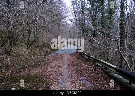 A stretch of abandoned A494 trunk road, overgrown and and being reclaimed by nature, Rhydymain Wales UK - Stock Photo