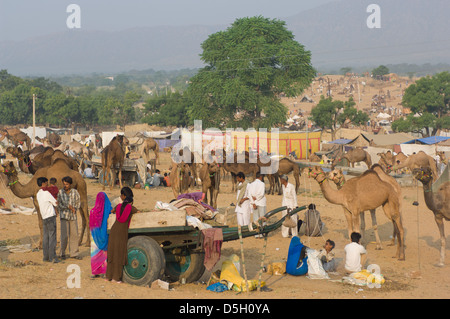 Rajasthani family camped around their camel cart amidst a sea of camels, in the desert at the Pushlar Mela, Pushkar, Rajasthan, India