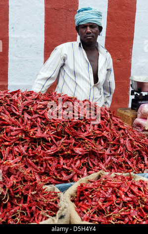 Bags of red chillies on an Indian market - Stock Photo