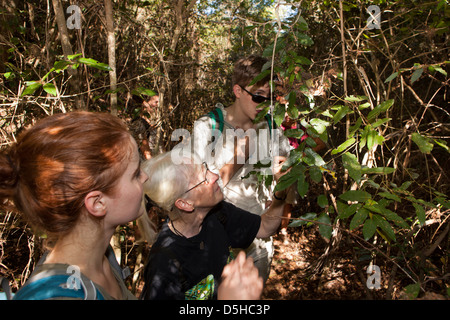Madagascar, Operation Wallacea, Mariarano, students and teacher conducting survey in dry forest - Stock Photo