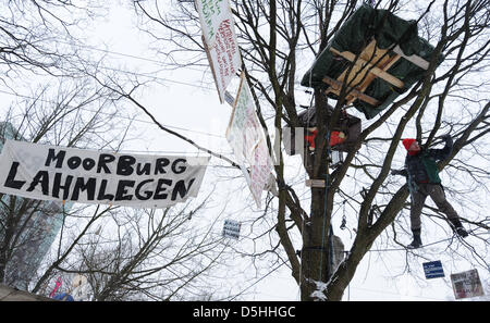 An activist of environemental organisation 'Robin Wood' climbs a tree in Hamburg, Germany, 10 February 2010. Since - Stock Photo