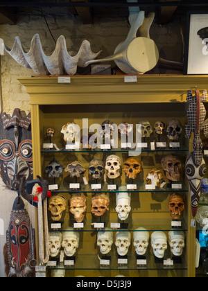 Evolution store in New York City - Stock Photo
