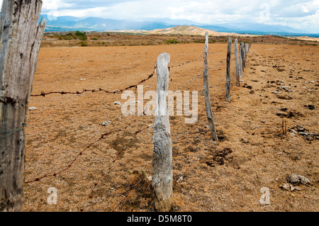 Old weathered fence posts in a dry arid region - Stock Photo