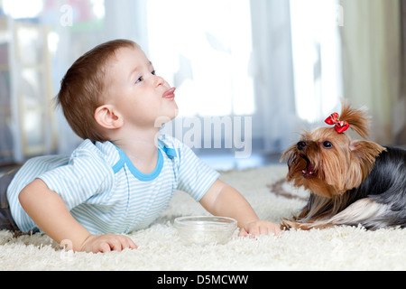 adorable boy feeding yorkshire terrier dog at home - Stock Photo